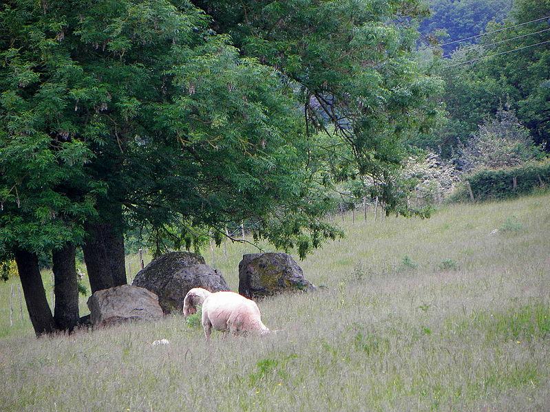 Photo du Monument Historique Deux pierres de la Cahorie situé à Bouchamps-lès-Craon