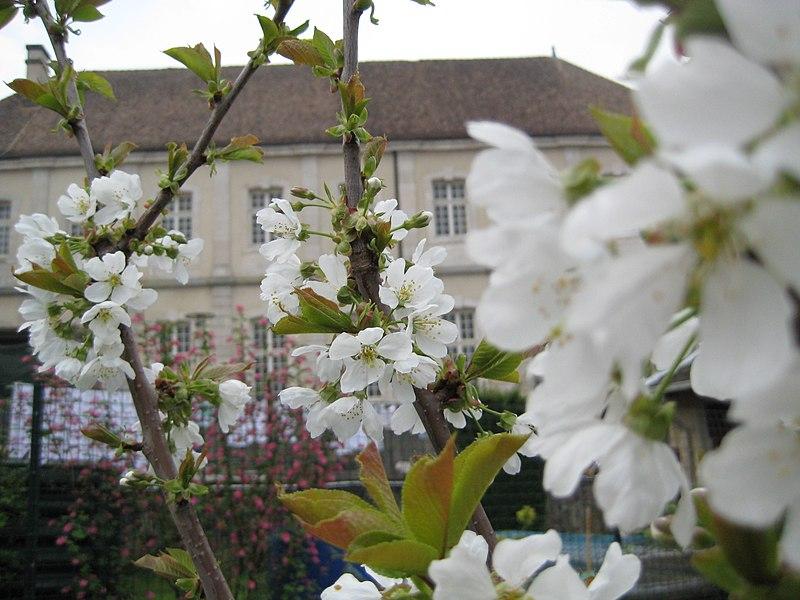 Photo du Monument Historique Ancien prieuré de Breuil situé à Commercy