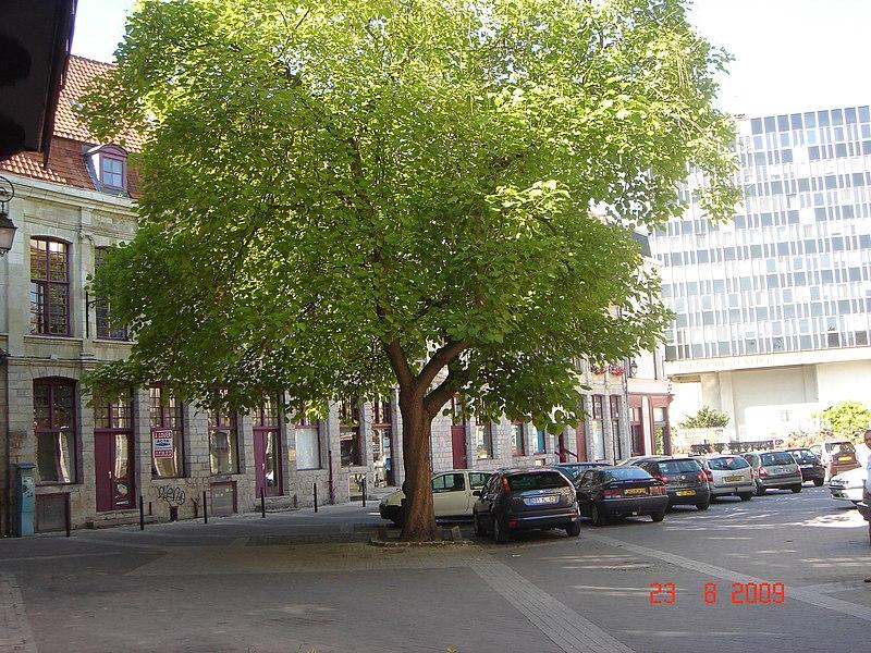 Photo du Monument Historique Place du Marché-au-Poisson situé à Douai
