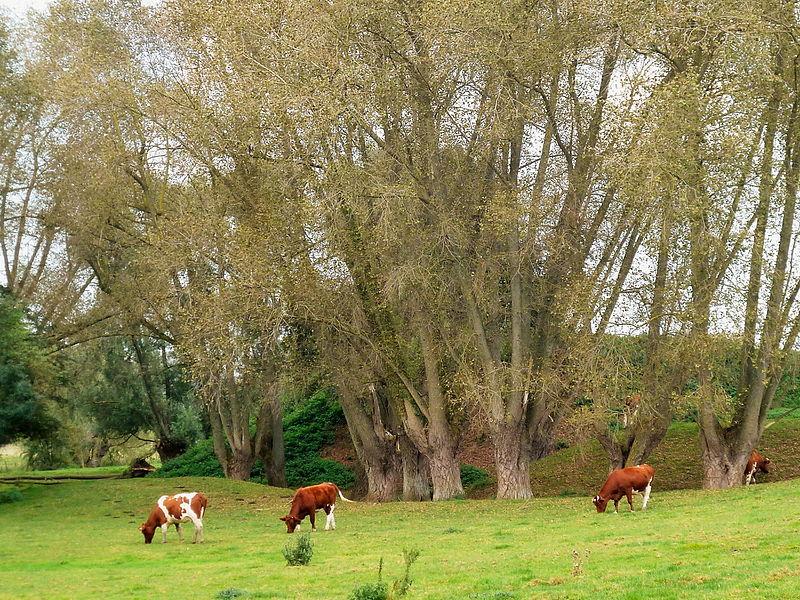 Photo du Monument Historique Motte féodale situé à Ochtezeele