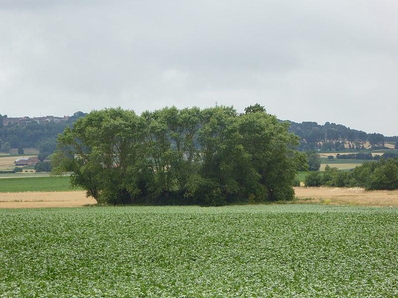 Photo du Monument Historique Motte féodale situé à Oudezeele