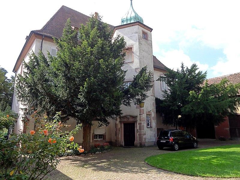 Photo du Monument Historique Château des Ifs situé à Kientzheim