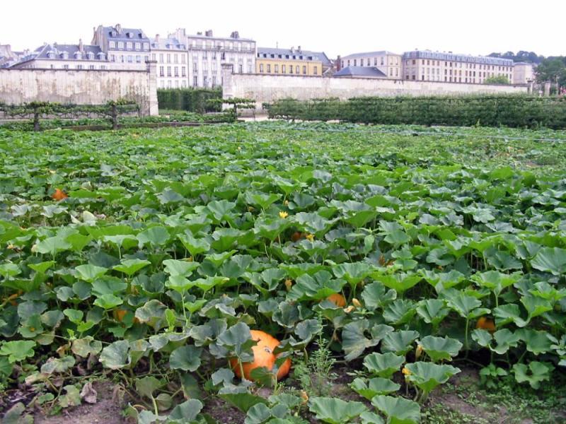 Photo du Monument Historique Domaine national : ancien potager du Roi et parc de Balbi situé à Versailles