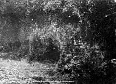 Restes de la villa romaine de Lacou-Dausena - Restes d'un pan de mur couvert de végétation