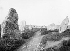 Alignement et dolmen de Kermario - Vue d'ensemble