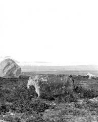 Alignement et dolmen de Kermario - Menhir renversé