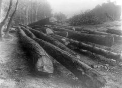 Domaine national de Versailles - Parc : arbres coupés