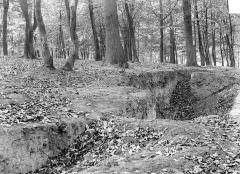 Domaine national de Versailles - Parc : sol forestier