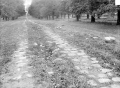 Domaine national de Versailles - Parc : allée