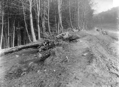 Domaine national de Versailles - Parc : lisière du bois