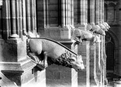 Cathédrale Notre-Dame - Gargouilles, façade sud