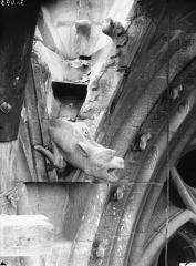 Cathédrale Notre-Dame - Tour sud, gargouille